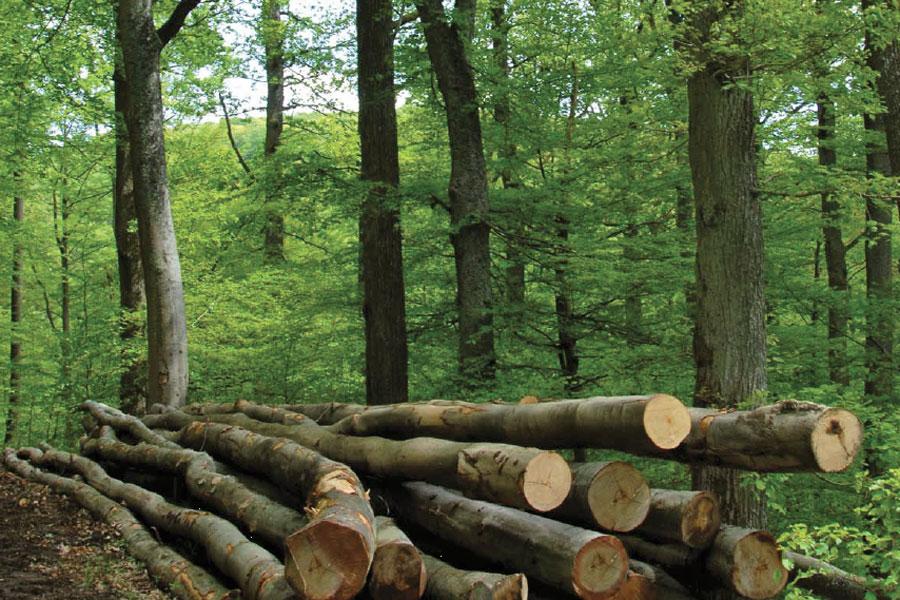 Biomassekessel - Heizsysteme für Holzbrennstoffe